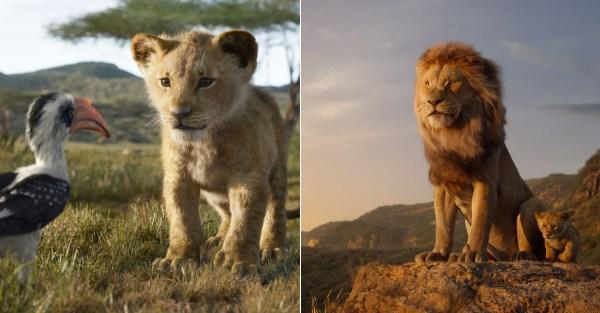 lion king # 66