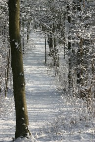 Shadows on one of the trails.