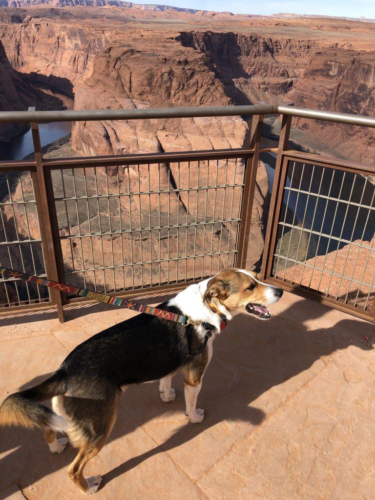 Horseshoe Bend Dog Friendly