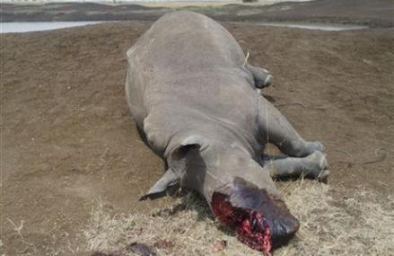POACHERS KILL RHINO IN NAIROBI NATIONAL PARK