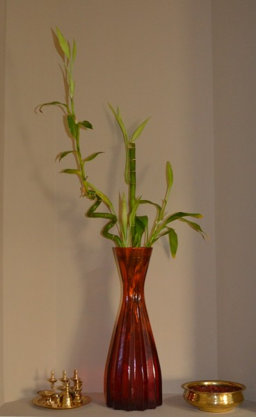lucky bamboo, Indoor Plants