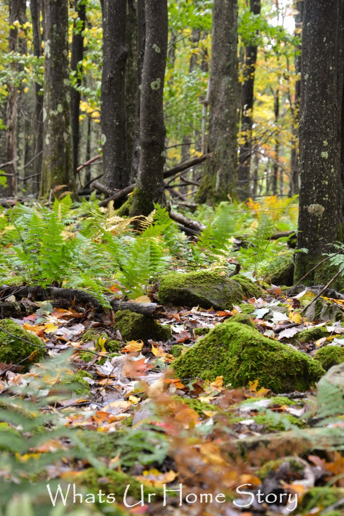Moss on the forest floor in Cannan Valley Resort West Virginia