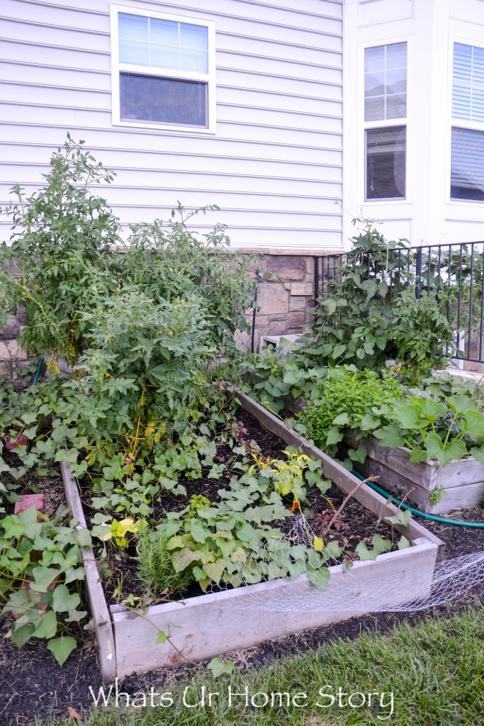 Vegetabe raised garden bed with sweet potato, tomato, rosemary, peppers