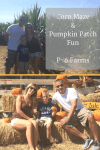 Corn Maze & Pumpkin Patch fun at P-6 Farms