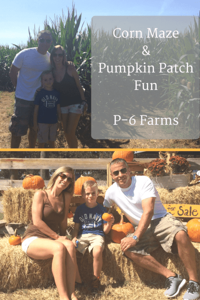 Corn Maze & Pumpkin Patch Fun P-6 Farms