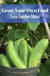 Grow Your Own Food:  Easy Garden Ideas