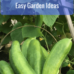 Grow Your Own Food:  Easy Garden Ideas