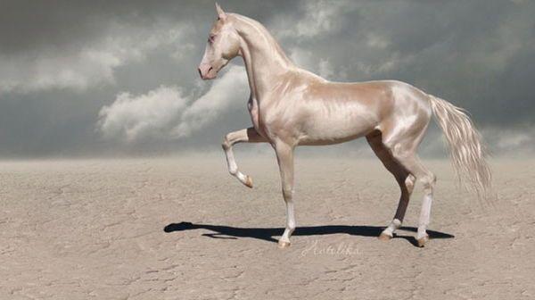 اجمل حصان في العالم صور احصنة روعة كيف