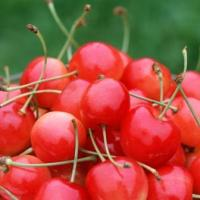 10 Amazing Nutritional Benefits of Cherries