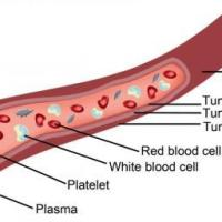 10 Interesting Facts About Blood