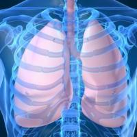 10 Interesting Facts About Lungs