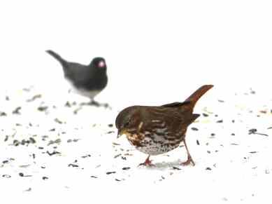 BirdRadiant2