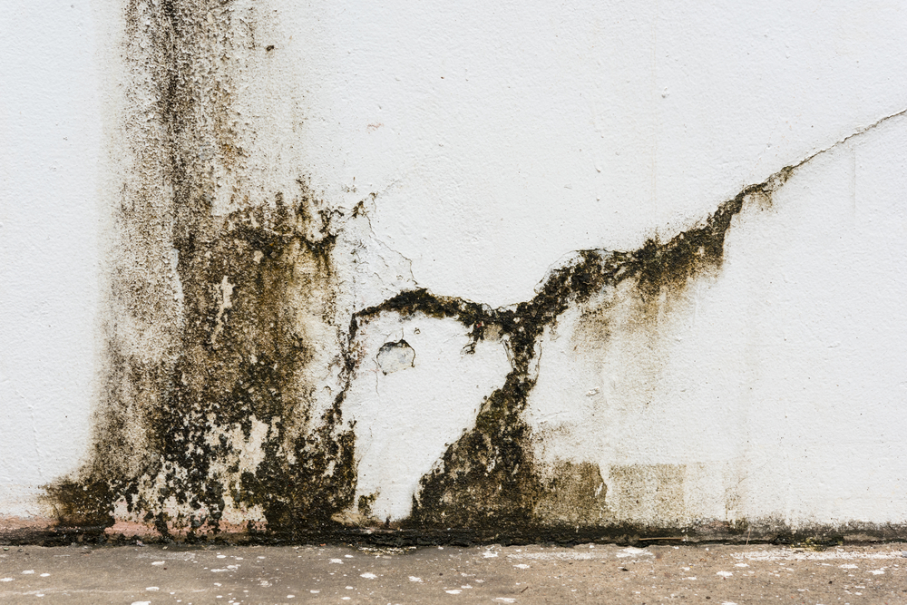 Why Mould is the The 'New Asbestos'