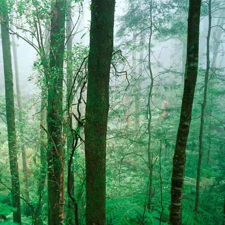 Maya Medicine Rainforest Home Remedies What Therapy
