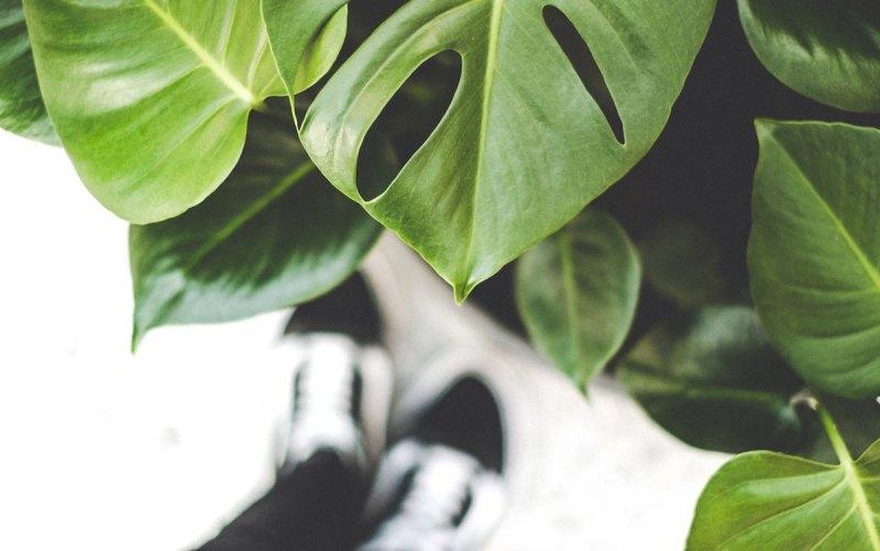 Plants photo by roos-oosterbroek