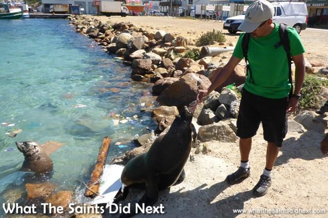 Darrin has a go at feeding the seals.