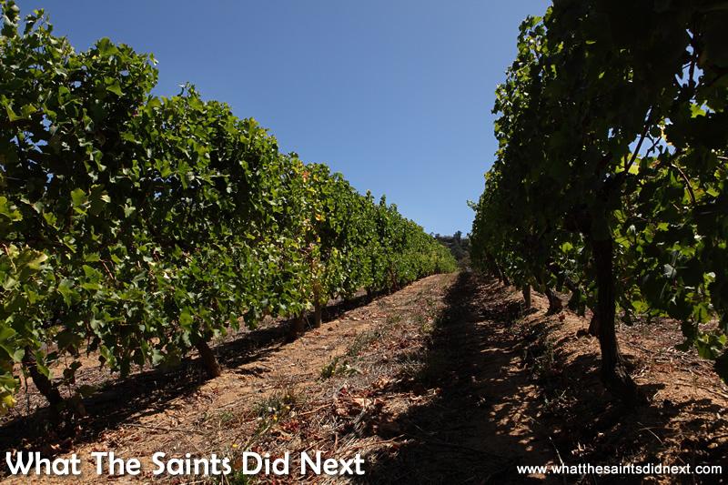Groot Constantia vineyards.