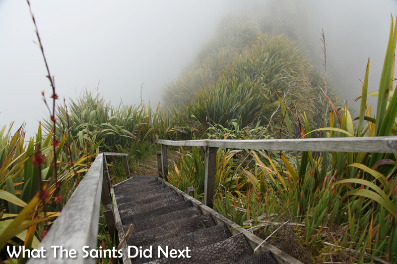 Walking through the cloud forest on the island's central peaks.