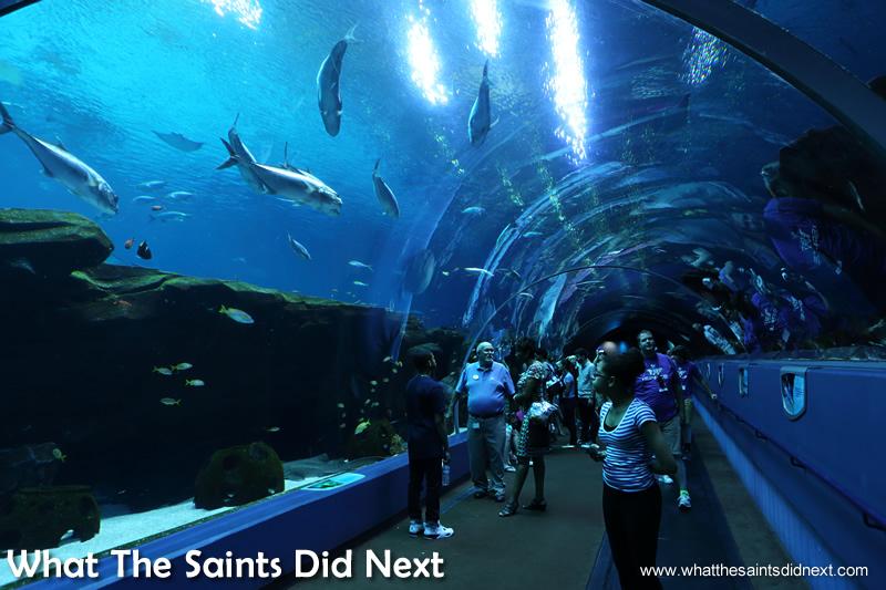 Taking the glass tunnel stroll under the Aquarium fish.