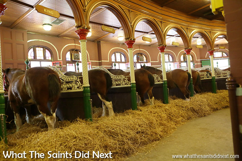 The Budweiser Clydesdale horses live in very smart stables on the brewery premises.  The Budweiser Brewery tour St Louis.