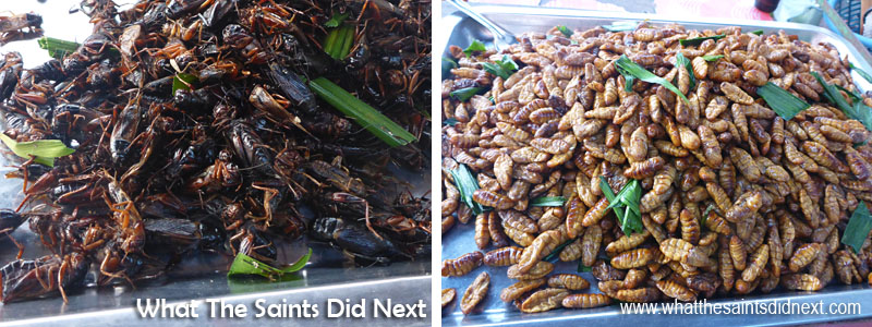 Fried insects and grubs on sale from a street vendor in Bangkok. Sharon was quick to give these a try!