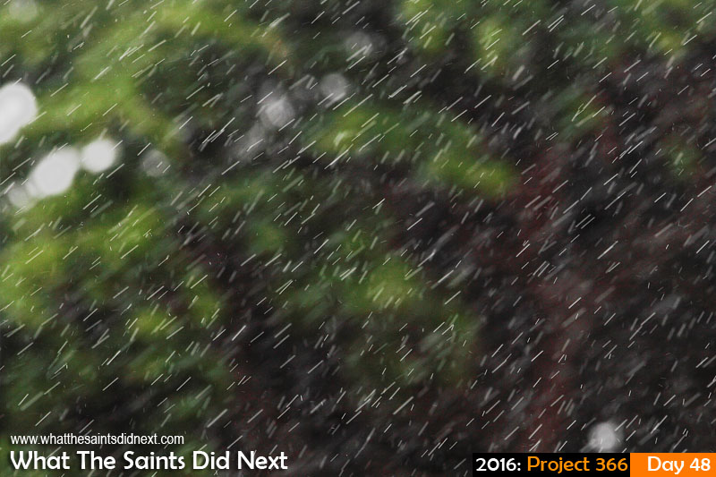 'Keanu'<br /> 17 February 2016, 12:05 - 1/400, f/9, ISO-200<br /> Midday shower of rain falling past trees.