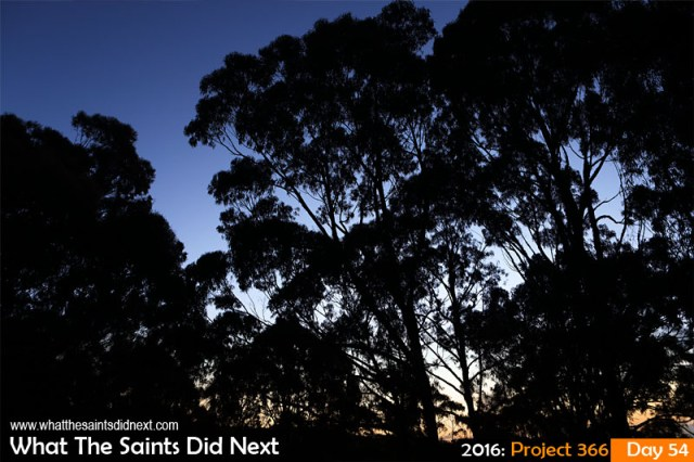 'Early' 23 Feb 2016, 18:56 - 1/125, f/7.1, ISO-400 What The Saints Did Next - 2016 Project 366 Eucalyptus trees in St Pauls district, St Helena, at dusk.