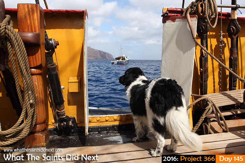 'Endorsement'<br /> 24 May, 2016, 10:58 - 1/500, f/8, ISO-200<br /> Sirius (the dog) on board the visiting sailing ship, unable to go ashore.