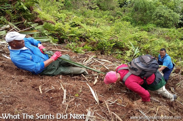 This is me, needing some help climbing up the steep hillside during the flax clearing process. William is pulling me up with a length of flax. Diana's Peak National Park, St Helena Island.
