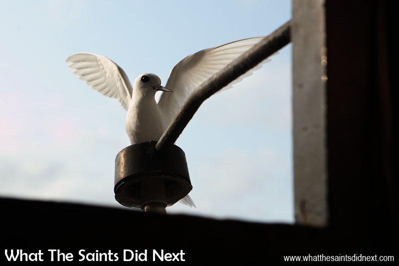 White terns are also quck to 'nest' on tall man-made structures. This little bird is perched on the St James Church clock tower light, in Jamestown. Spotted him while we were photographing the historic clock with Roddy. Photographing white terns (gygis alba) on St Helena.