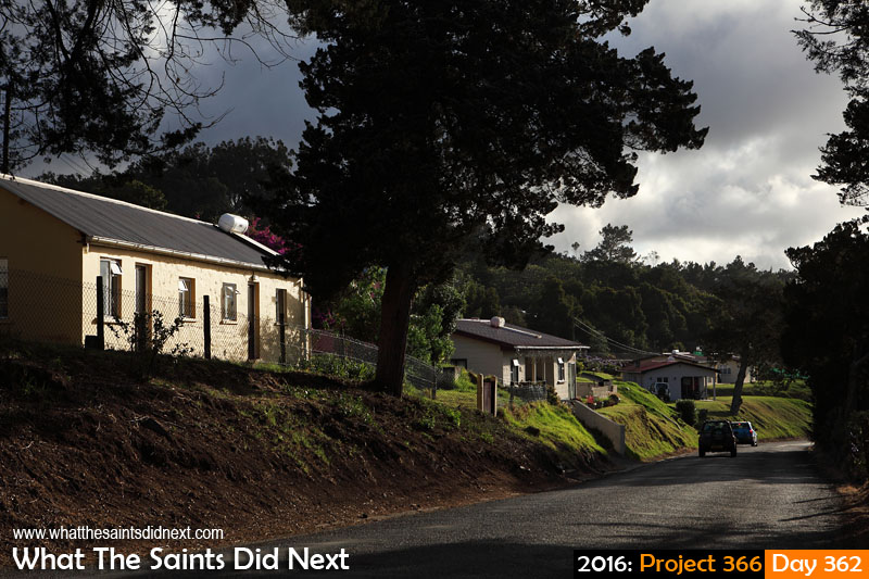 'Princess Leia' 27 December 2016, 17:45 - 1/1000, f8, ISO-200 What The Saints Did Next - 2016 Project 366 Alarm Forest, St Helena Island.