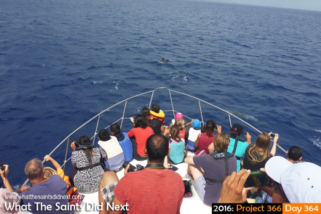 'Expelled' 29 December 2016, 10:54 - 1/500, f9, ISO-200 What The Saints Did Next - 2016 Project 366 Dolphin watching boat trip, St Helena Island.