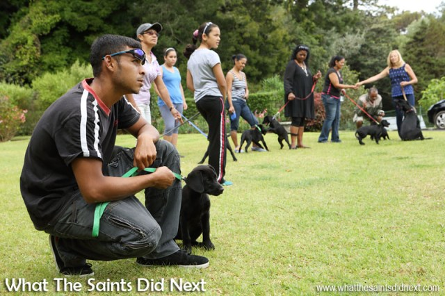 Puppies and new owners settle down to begin the training class on Plantation lawn. New Dogs, Old Tricks - Dusty's Dozen.