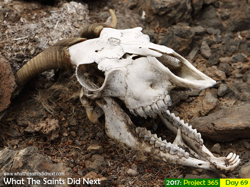 'Giving up'<br /> 10 March, 2017, 11:55 - 1/800, f8, ISO-200<br /> Goat skull found on the coastal hillsides.