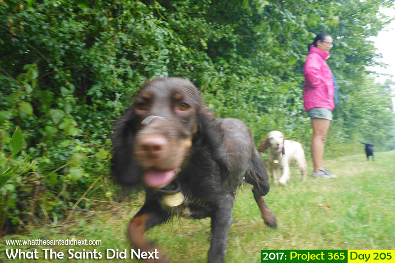 What The Saints Did Next - 2017 Project 365 Dog walking in the rain.
