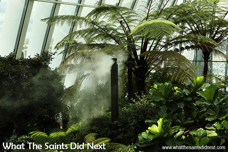 This must be one of the most unusual public gardens in London. Misting units regulates the Sky Garden humidity at 75% for the giant tree ferns and other plant life.