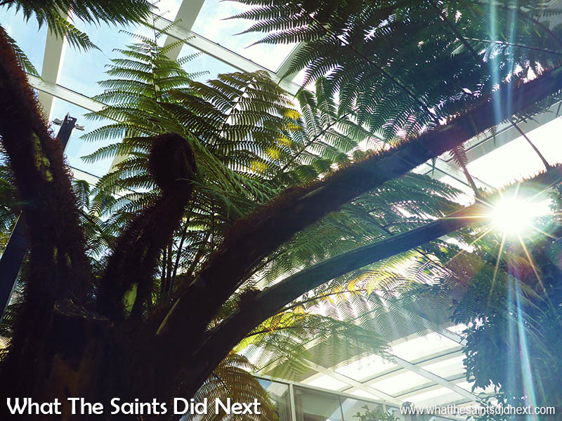 Walking under the Skygarden jungle, where the furry tree ferns reminds me of St Helena Island.
