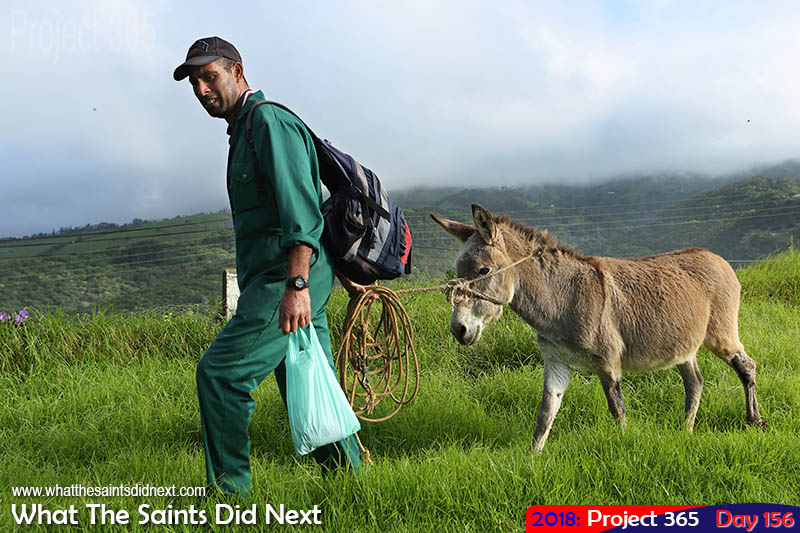 Home time for Anthony Thomas and his donkey, Charlie.