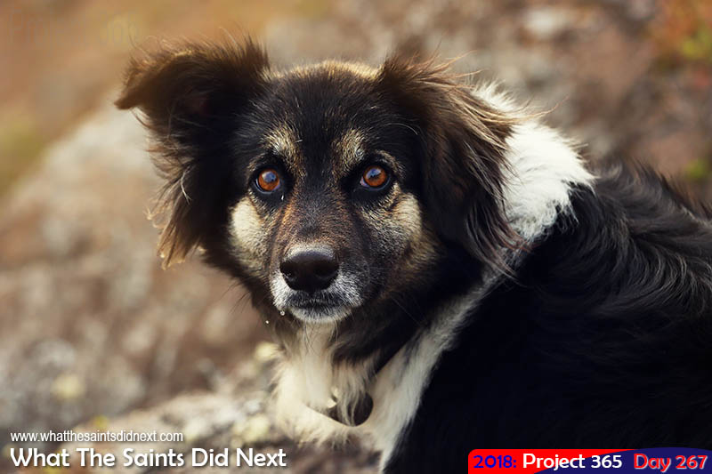 A dog called Dobby.