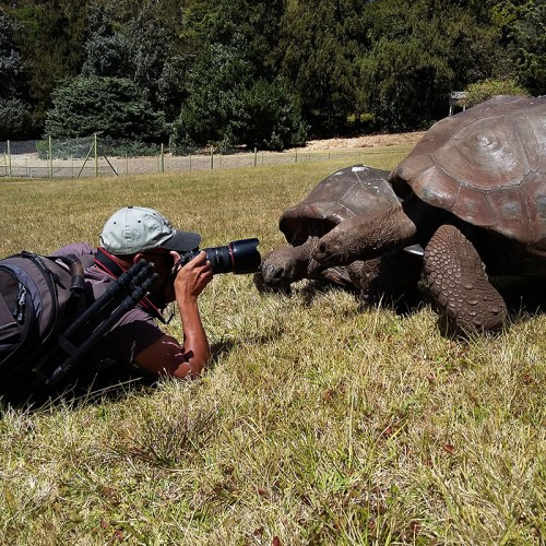 Darrin tortoises