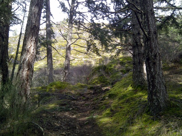 A brightly-lit hike through the forest