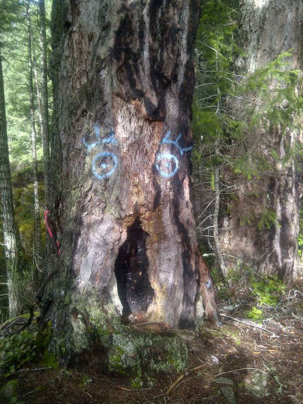 This tree marks the summit trail.
