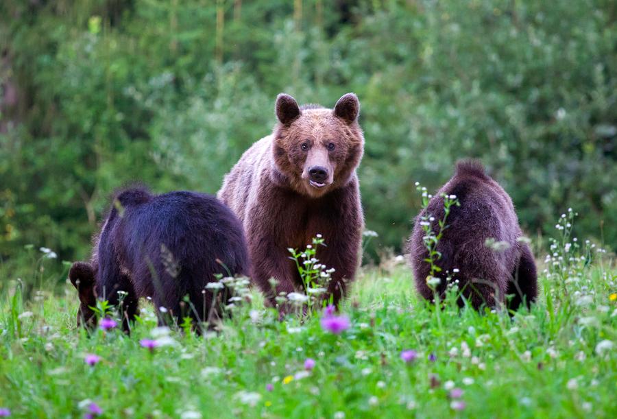 Артур Хейз: «Медвежий» рынок биткоина может продлиться ещё 18 месяцев