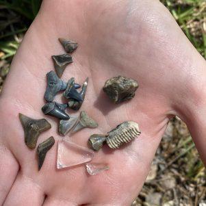 Sophia's fossils