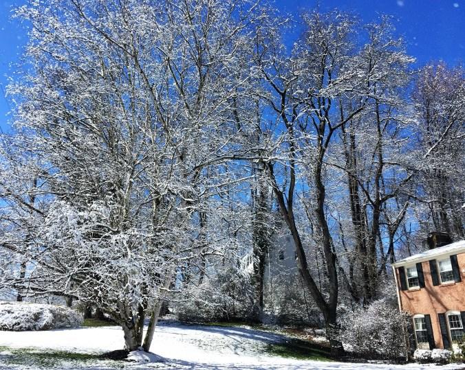 snow Casa Stuarti