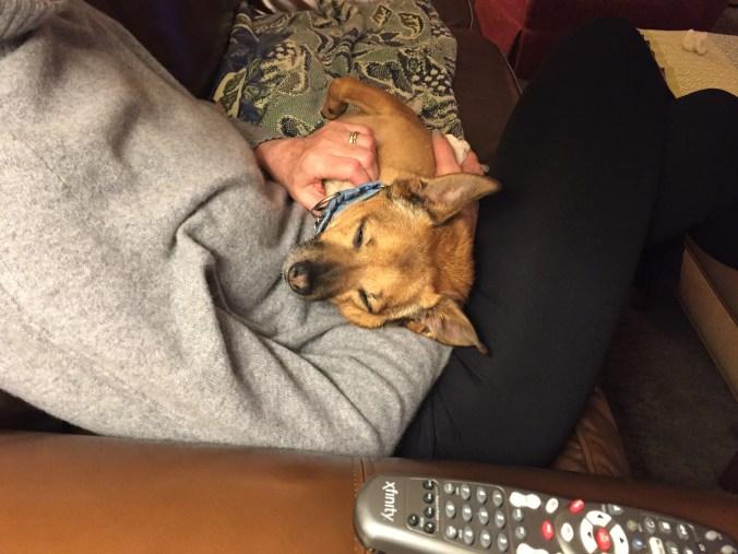 comfortable dog