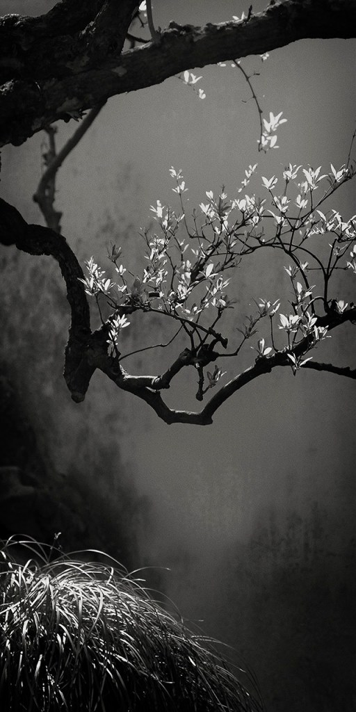 """Suzhou Branch, 2013"", 18""x 9"" archival pigment print on Baryta paper by Clyde Heppner (courtesy of the artist)"