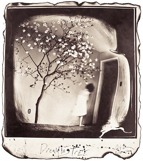 """Dreaming Tree, 2009"" from the series Silent Moan, gelatin silver print by Michael Donnor (courtesy of the artist and Panopticon Gallery, Boston)"