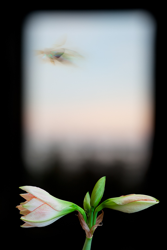 """""""Evergreen Window, 2012"""" Epson Ultrachrome print from the series """"Still/Life"""" by Olivia Parker (courtesy of the artist and Robert Klein Gallery, Boston)"""