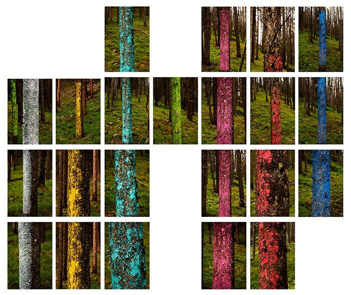 """""""Tree Lines, 2013"""" by Mary Ellen Strom (courtesy of the artist and 555 Gallery, Boston)."""